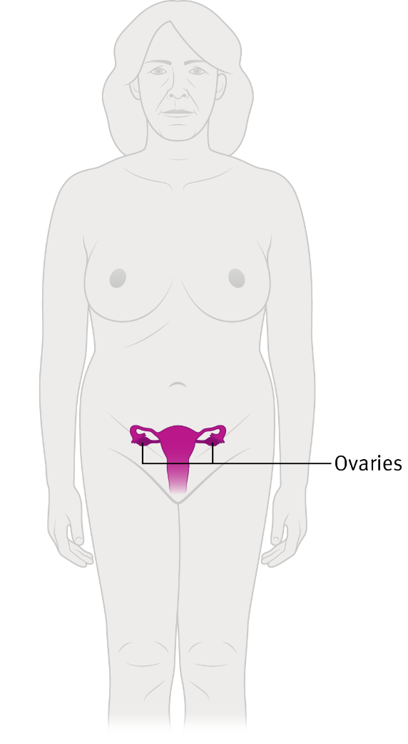 Diagram showing the location of the ovaries in the body